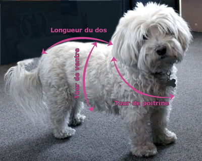 photo tricot modele tricoter pull chien 14