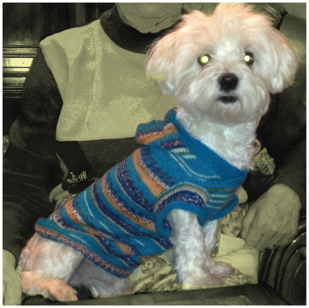 photo tricot modele tricoter pull chien 17