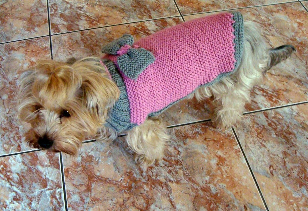photo tricot modele tricoter pull chien 4