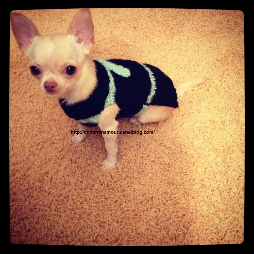 photo tricot modele tricoter pull chien 5