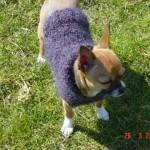 photo tricot modèle tricot manteau pour chien 12