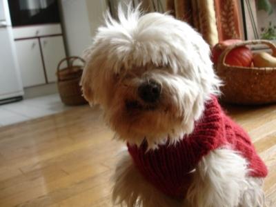comment tricoter manteau pour chien