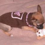 photo tricot modèle tricot manteau pour chien