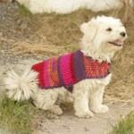 photo tricot modèle tricot manteau pour chien 16