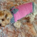 photo tricot modèle tricot manteau pour chien 17