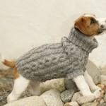 photo tricot modèle tricot manteau pour chien 2