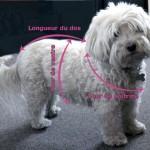 photo tricot modèle tricot manteau pour chien 4