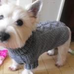 photo tricot modèle tricot manteau pour chien 9